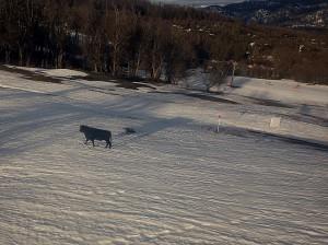 The Patagonian Ski Bull