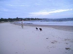 Look at all the open beach...great for the dogs!